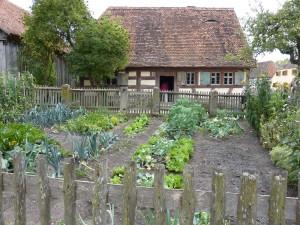 Grow Your Own Organic Vegetable Garden